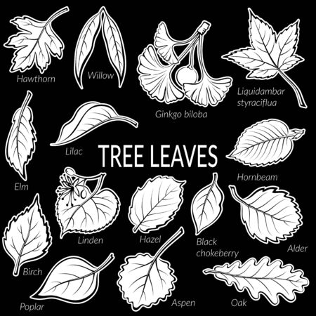 linden tree: Set of Nature Pictograms, Tree Leaves, Oak, Willow, Liquidambar, Hawthorn, Poplar, Aspen, Hazel, Ginkgo Biloba, Elm, Birch, Alder, Linden, Hornbeam, Chokeberry and Lilac. White on Black. Vector Illustration