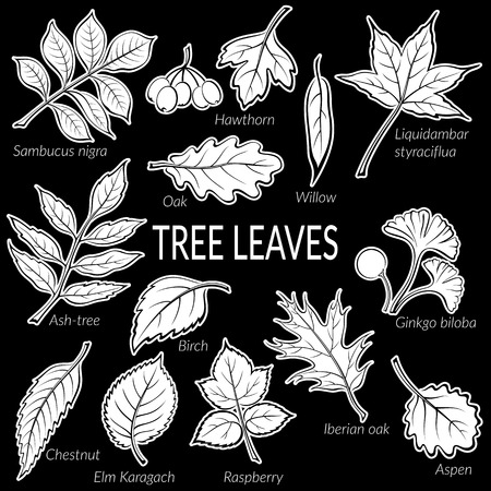 chestnut tree: Set of Nature Pictograms, Tree Leaves, Oak, Iberian Oak, Raspberry, Willow, Liquidambar, Hawthorn, Aspen, Ginkgo Biloba, Elm Karagach, Birch, Ash-tree, Chestnut and Sambucus. White on Black. Vector