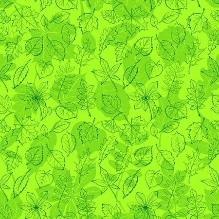 buckeye: Seamless Leaf Contour Silhouette Dogrose, Oak, Iberian Oak, Maple, Liquidambar, Hawthorn, Poplar Silver, Hazel, Elm, Birch, Linden, Rowan, Chestnut, Buckeye, Viburnum, Chokeberry, Lilac, Teak. Vector