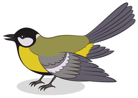 chickadee: Realistic Cartoon Bird Titmouse, Isolated on White Background.