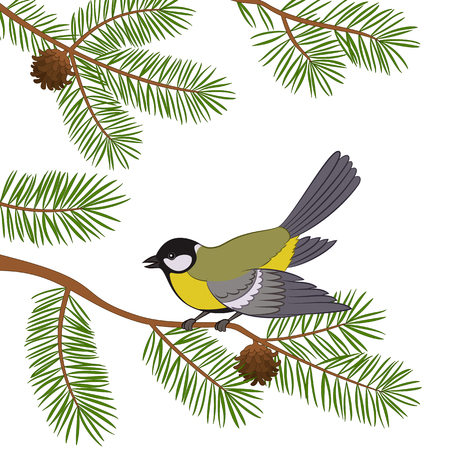 chickadee: Bird Titmouse Sitting on Pine Tree Branch with Green Needles and Cones, Isolated on White Background. Illustration