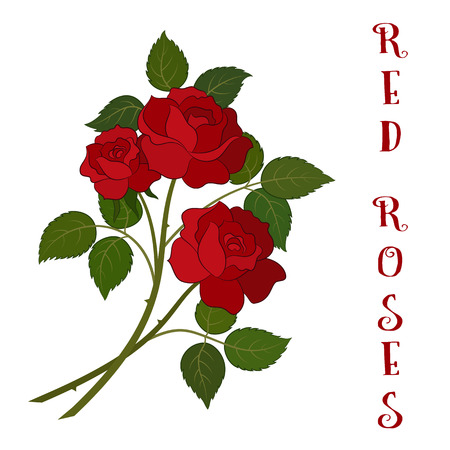 Roses Bouquet, Three Beautiful Red Flowers with Green Leaves, Floral Gift, Love Symbol for Your Holiday Design.
