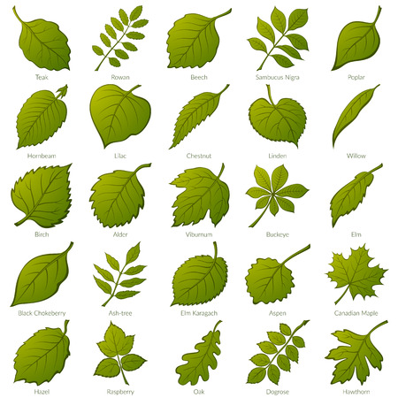 Set of Green Leaves of Various Plants.