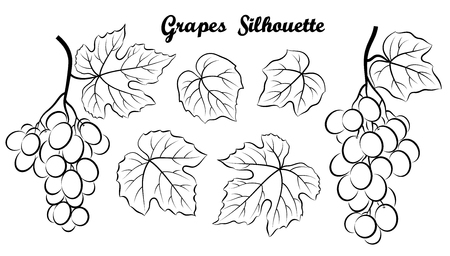 Set of Plant Pictograms, Grape Berries and Leaves, Black Contour on White Background. Vector 向量圖像