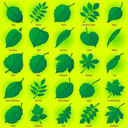 Set of Green Leaves of Various Plants, Trees and Shrubs, Nature Icons for Your Design. Vector Illustration