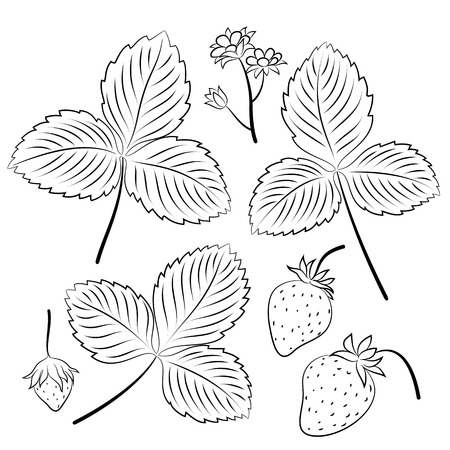 Set of Wild Strawberry, Berries and Leaves, Black Pictograms Isolated on White. Vector