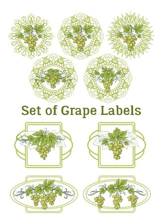 Set of Labels, Stickers with Green Grape Bunches, Berries and Leaves, on Ellipse and Square Frames. Vector Ilustração