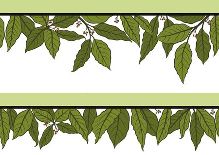 Seamless Floral Pattern with Green Laurel Bay Leaf Isolated on White Background. Vector Vektorgrafik