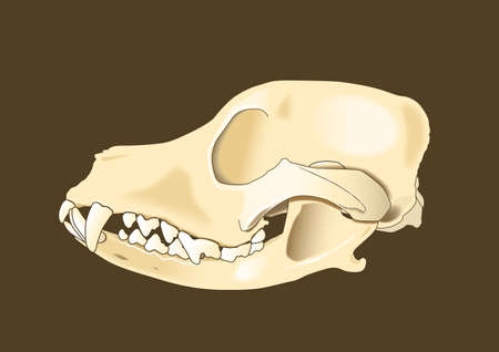 skull of dog section with bones x ray