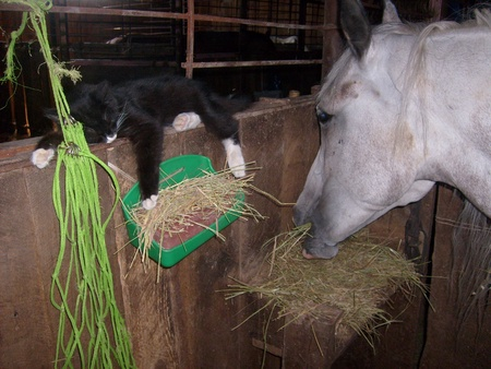untroubled: cat and horse