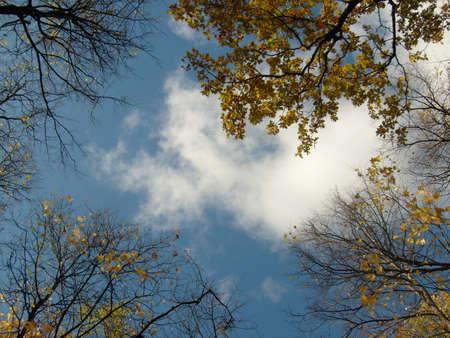 to clarify: autumn sky