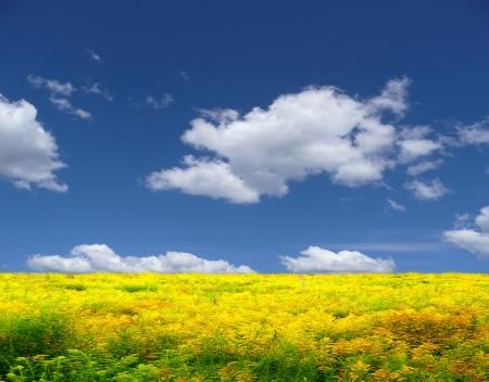 ciel avec nuages: Fond jaune paysage de prairies,