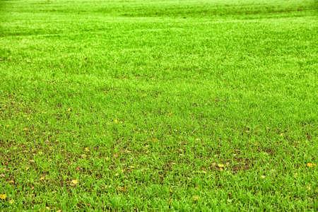 Kelly green lawn background Stock fotó