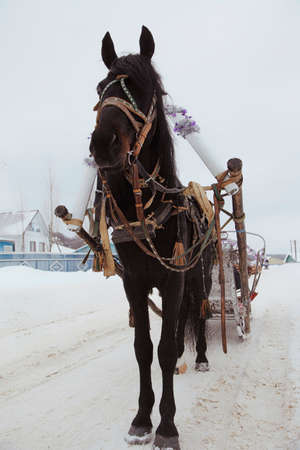Black horse in harness on the road in winter village Stock Photo
