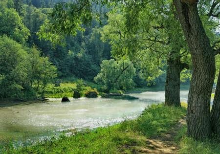 Lush trees on the bank of a shallow river
