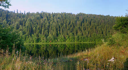 Forested slope above the quiet river in summer