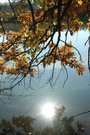 The reflection of the evening sun in the autumn pond