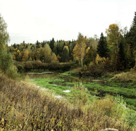 Swampy marsh at the edge of forest in early autumn Stock Photo
