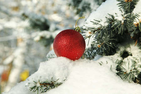Red Christmas ball on snow covered fir branch close up
