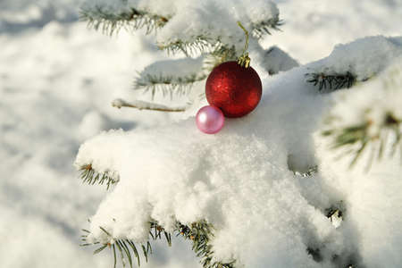 Two Christmas balls on snow covered fir branch close up