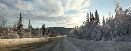 Winter panorama of the road along which grow fir trees