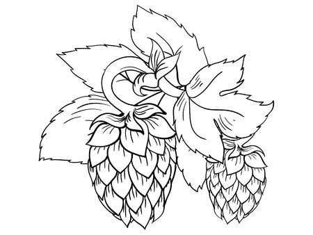 Colorless vector illustration of vector hops with leaves