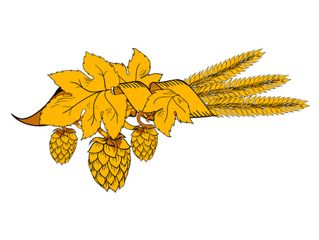 Yellow design hops branch with wheat vector illustration