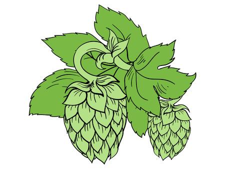 Colore verde illustrazione vettoriale di luppolo con foglie Archivio Fotografico - 46310348