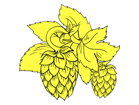 brewery  hops: Yellow color hops with wheat vector illustration