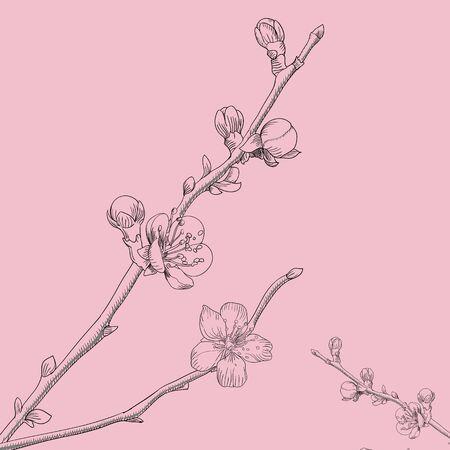 cherry branch: Minimalistic thin lines pink cherry branch vector illustration