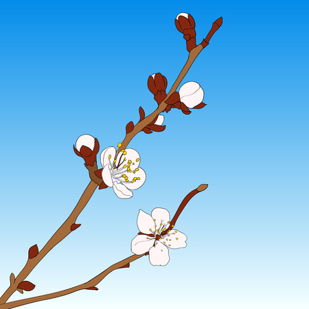 cherry branch: Minimalistic thin lines color cherry branch vector illustration
