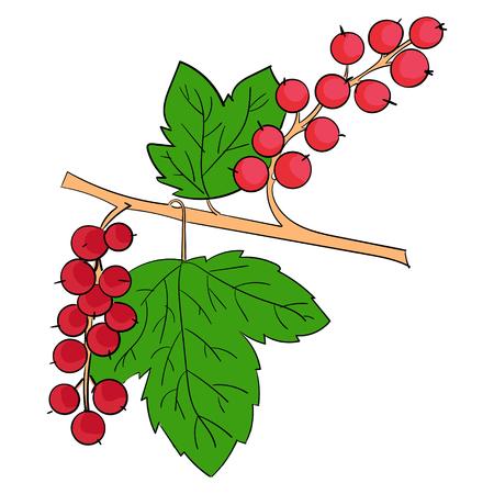 currants: Currants berries doodle hand drawn vector illustration