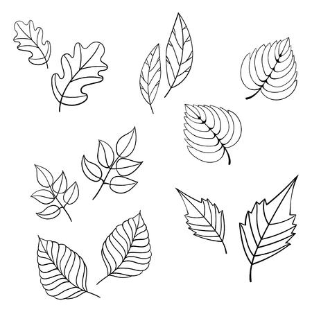 vintage leaf: Black leaves hand drawn doodle vector illustration