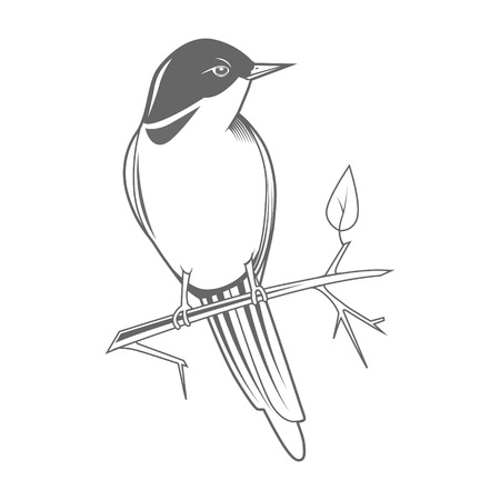 birds on branch: Engraving bird nightingale emblem color grey vector illustration