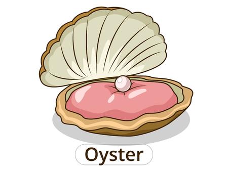 Oyster Unterwasser-Tierkarikatur-Vektor-Illustration für Kinder Standard-Bild - 46526767