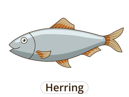 herring: Herring underwater animal cartoon vector illustration for children