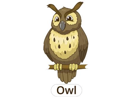 nocturnal animal: Forest owl bird cartoon for children vector illustration Illustration
