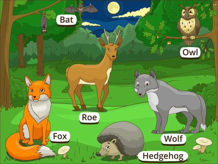 nocturnal: Forest with cartoon animals with names educational game vector llustration Illustration