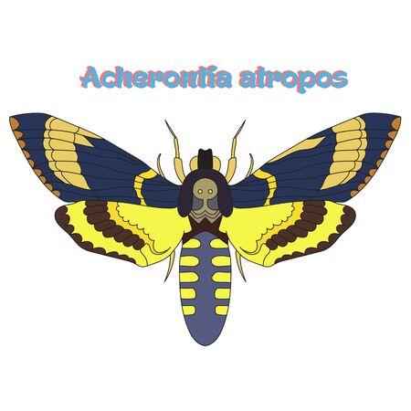 butterfly: Butterfly Acherontia atropos cartoon doodle hand drawn vector illustration Illustration