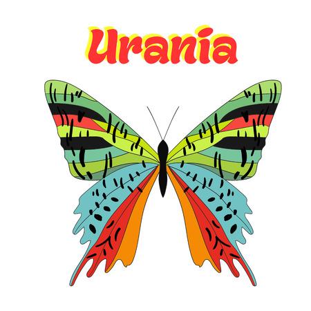 butterfly: Butterfly urania cartoon doodle hand drawn vector illustration Illustration