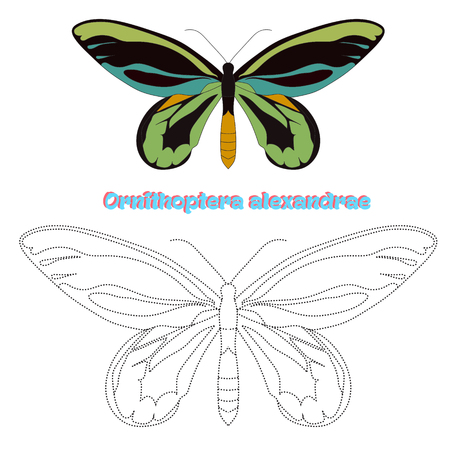 papillon rose: Educational game for children connect the dots to draw butterfly cartoon doodle hand drawn vector illustration