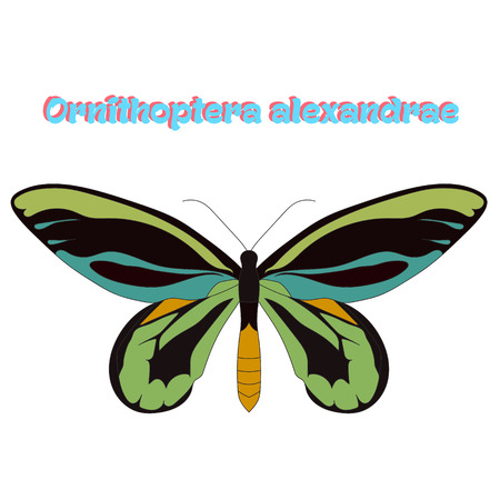 butterfly: Butterfly Ornithoptera alexandrae cartoon doodle hand drawn vector illustration