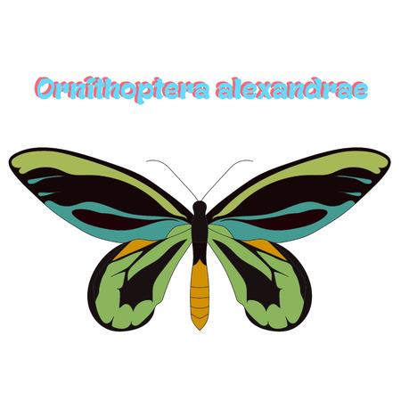seasons cartoon: Butterfly Ornithoptera alexandrae cartoon doodle hand drawn vector illustration