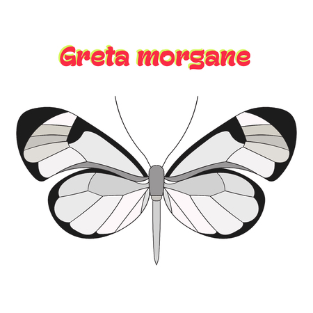 butterfly: Butterfly greta morgane cartoon doodle hand drawn vector illustration Illustration
