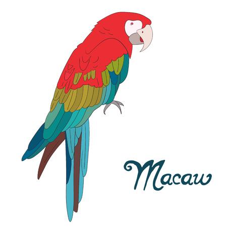 guacamaya caricatura: Guacamayo pájaro bosquejo de dibujos animados a mano ilustración vectorial dibujado
