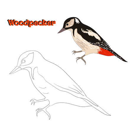 Educational Game Coloring Book Woodpecker Bird Cartoon Doodle Hand Drawn Vector Illustration Stock