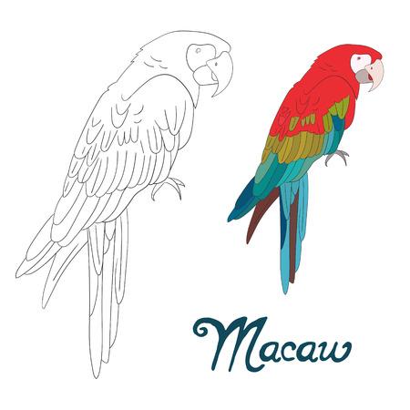 dessin enfants: Colorier jeu �ducatif doodle anim� livre ara aviaire main vecteur illustration tir�e Illustration
