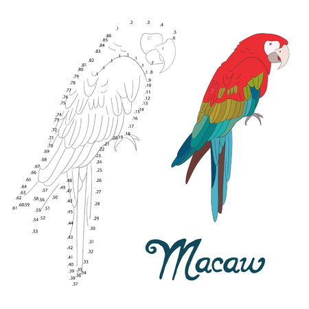 macaw: Educational game connect the dots to draw macaw bird cartoon doodle hand drawn vector illustration