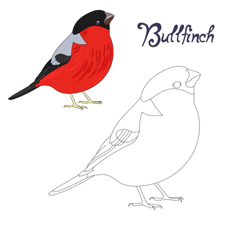 Educational game connect the dots to draw bullfinch bird  cartoon doodle hand drawn vector illustration