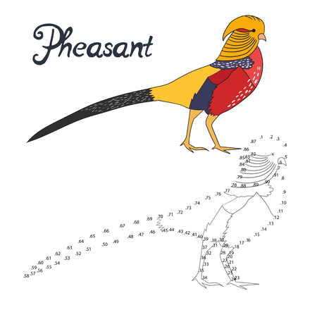 pheasant: Educational game connect the dots to draw pheasant bird  cartoon doodle hand drawn vector illustration